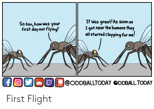 oddball: So son, how Was your  first day out flying?  It Was qreat!As soonas  I got near the humans they  all started clapping for me!  OOO囵OD@ODDBALLTODAY ODDBALLTODAY  @ODDBALLTODAY ODDBALL.TODAY First Flight