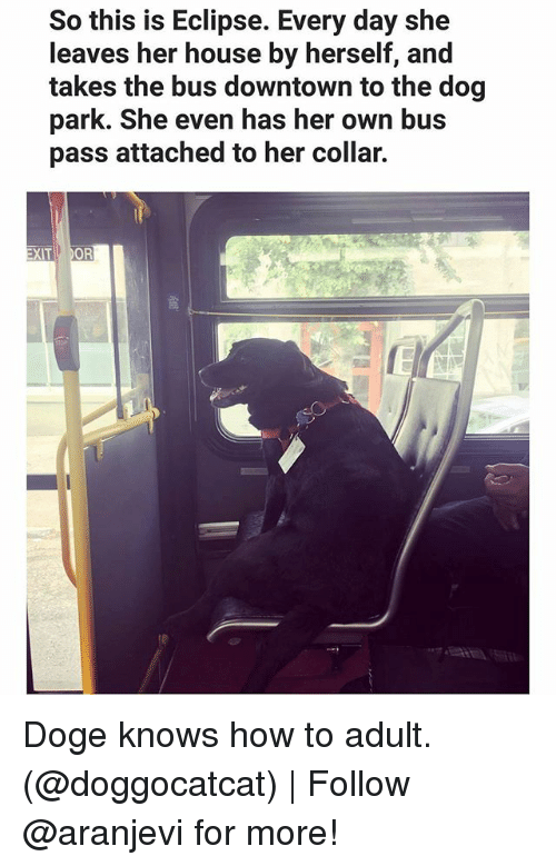 Dogee: So this is Eclipse. Every day she  leaves her house by herself, and  takes the bus downtown to the dog  park. She even has her own bus  pass attached to her collar.  OR  XIT Doge knows how to adult. (@doggocatcat) | Follow @aranjevi for more!