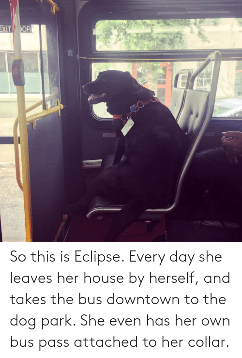 Eclipse: So this is Eclipse. Every day she leaves her house by herself, and takes the bus downtown to the dog park. She even has her own bus pass attached to her collar.