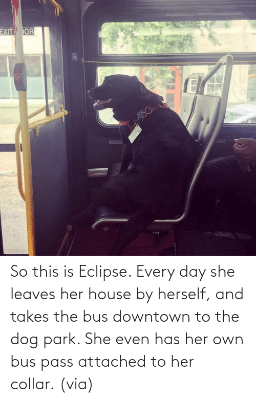 Eclipse: So this is Eclipse. Every day she leaves her house by herself, and takes the bus downtown to the dog park. She even has her own bus pass attached to her collar. (via)
