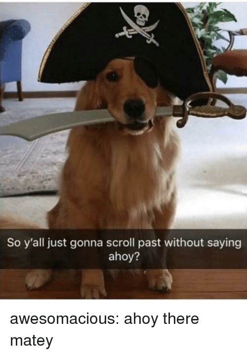 Tumblr, Blog, and Http: So y'all just gonna scroll past without saying  ahoy? awesomacious:  ahoy there matey