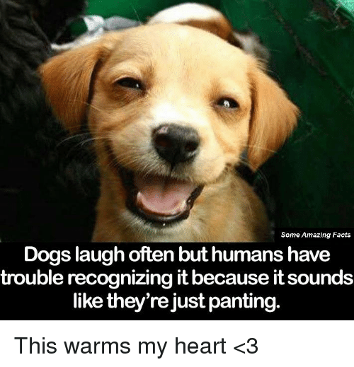 Dog Laughing: Some Amazing Facts  Dogs laugh often but humans have  trouble recognizing it because itsounds  like they're just panting. This warms my heart <3