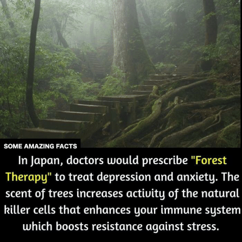 "Facts, Memes, and Anxiety: SOME AMAZING FACTS  In Japan, doctors would prescribe ""Forest  Therapy"" to treat depression and anxiety. The  scent of trees increases activity of the natural  killer cells that enhances your immune system  which boosts resistance against stress."
