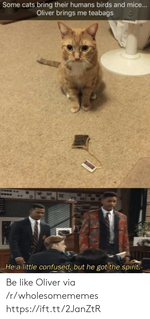 Oliver: Some cats bring their humans birds and mice...  Oliver brings me teabags  He a little confused, but he got the spirit. Be like Oliver via /r/wholesomememes https://ift.tt/2JanZtR