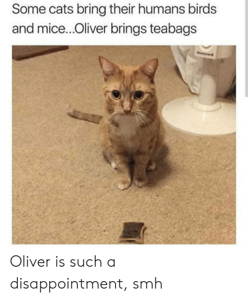 Oliver: Some cats bring their humans birds  and mice...Oliver brings teabags Oliver is such a disappointment, smh