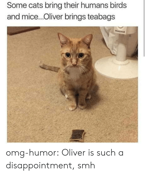 Oliver: Some cats bring their humans birds  and mice...Oliver brings teabags omg-humor:  Oliver is such a disappointment, smh