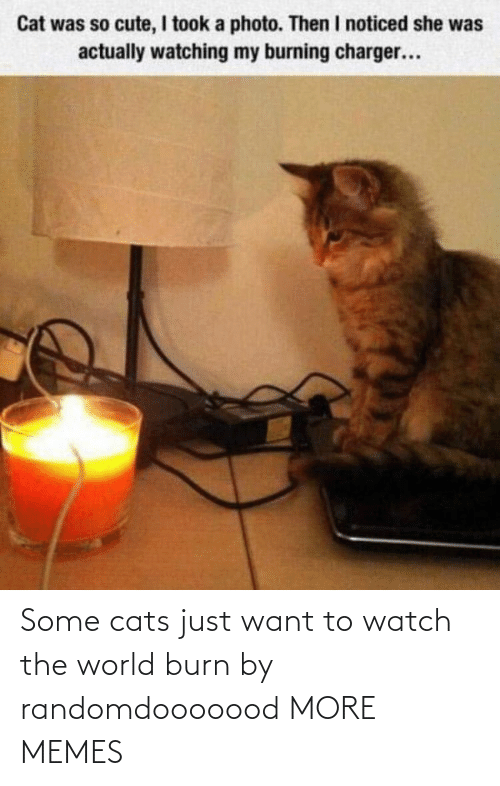 Watch: Some cats just want to watch the world burn by randomdooooood MORE MEMES