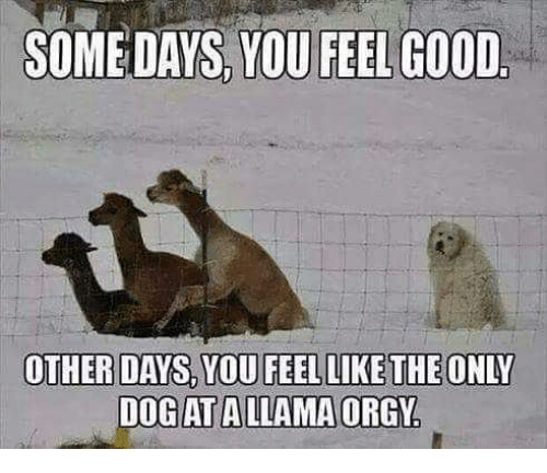 https://pics.esmemes.com/some-days-you-feel-good-other-days-dog-at-a-29244773.png