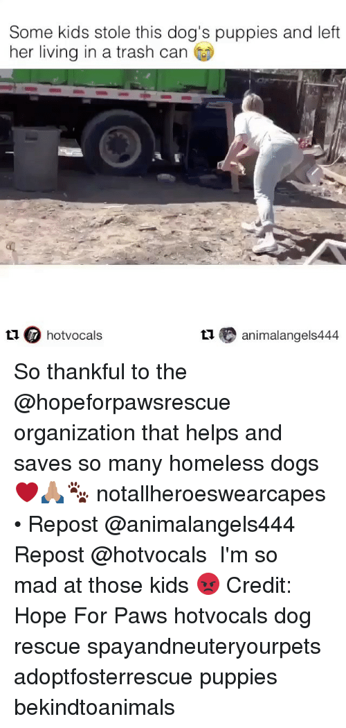Dogs, Homeless, and Memes: Some kids stole this dog's puppies and left  her living in a trash can  t1 hotvocals  t animalangels444 So thankful to the @hopeforpawsrescue organization that helps and saves so many homeless dogs ❤️🙏🏽🐾 notallheroeswearcapes • Repost @animalangels444 ・・・ Repost @hotvocals ・・・ I'm so mad at those kids 😡 Credit: Hope For Paws hotvocals dog rescue spayandneuteryourpets adoptfosterrescue puppies bekindtoanimals