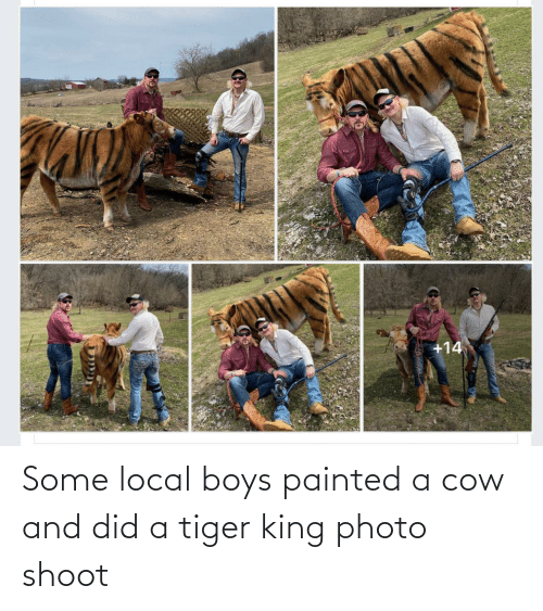 cow: Some local boys painted a cow and did a tiger king photo shoot