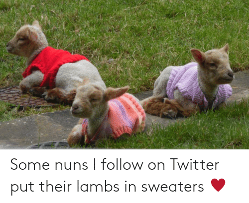 sweaters: Some nuns I follow on Twitter put their lambs in sweaters ♥️