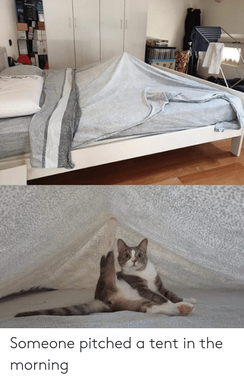 Dank, 🤖, and Morning: Someone pitched a tent in the morning