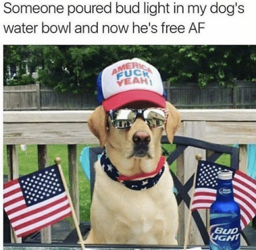 Af, Dank, and Dogs: Someone poured bud light in my dog's  water bowl and now he's free AF  AMERIC  FUCH  VEAH  BUD  IGHT