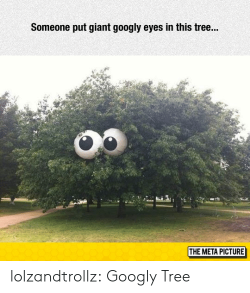 Tumblr, Blog, and Giant: Someone put giant googly eyes in this tre...  THE META PICTURE lolzandtrollz:  Googly Tree