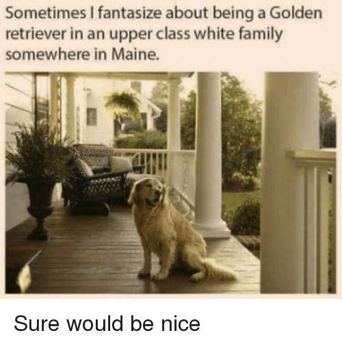 Maine: Sometimes I fantasize about being a Golden  retriever in an upper class white family  somewhere in Maine. Sure would be nice