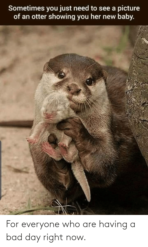 Just Need: Sometimes you just need to see a picture  of an otter showing you her new baby. For everyone who are having a bad day right now.