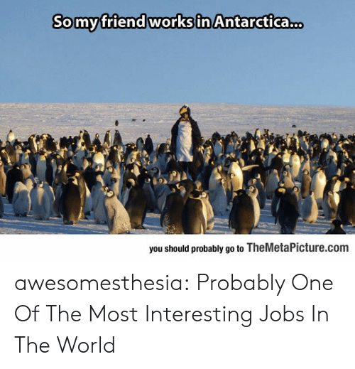 Tumblr, Blog, and Jobs: Somyfriend works in Antarctica.  you should probably go to TheMetaPicture.com awesomesthesia:  Probably One Of The Most Interesting Jobs In The World