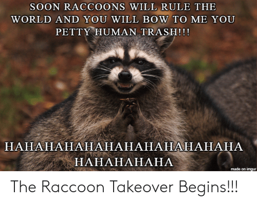 Raccoon: SOON RACCOONS WILL RULE THE  WORLD AND YOU WILL BOW TO ME YOU  PETTY HUMAN TRASH!!!  НАНАНАНАНАНАНАНАНАНАНАНА  НАНАНАНАНА  made on imgur The Raccoon Takeover Begins!!!