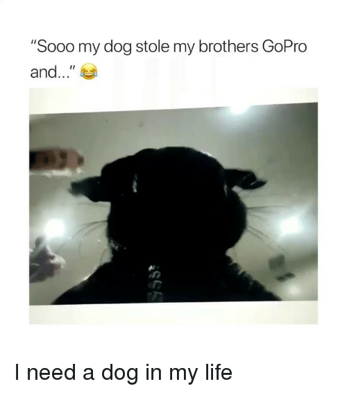 "GoPro: ""Sooo my dog stole my brothers GoPro  and.."" I need a dog in my life"