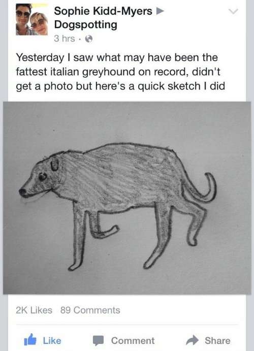 Saw, Record, and Kidd: Sophie Kidd-Myers  Dogspotting  3 hrs  Yesterday I saw what may have been the  fattest italian greyhound on record, didn't  get a photo but here's a quick sketch I did  2K Likes 89 Comments  Comment  Share  Like