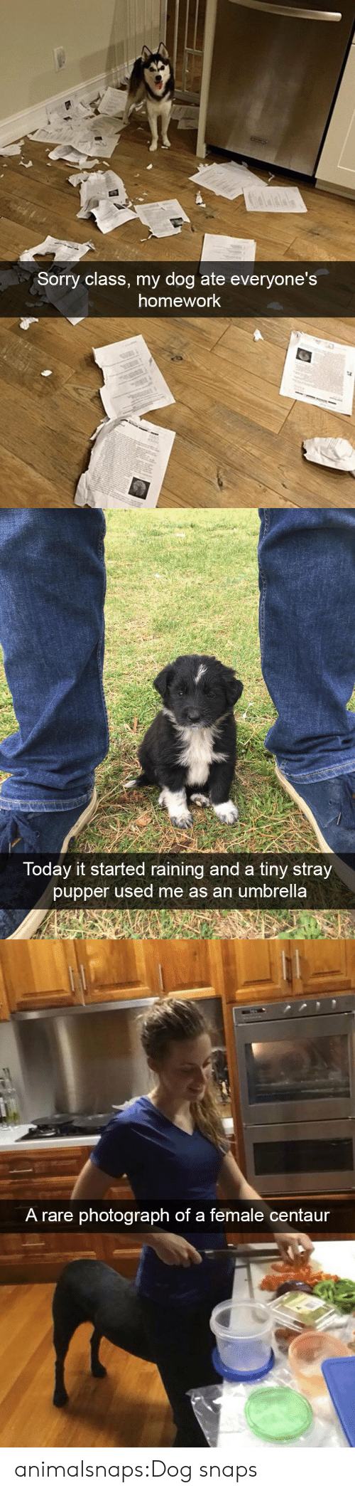 pupper: Sorry class, my dog ate everyone's  homework   Today it started raining and a tiny stray  pupper used me as an umbrella   A rare photograph of a female centaur animalsnaps:Dog snaps