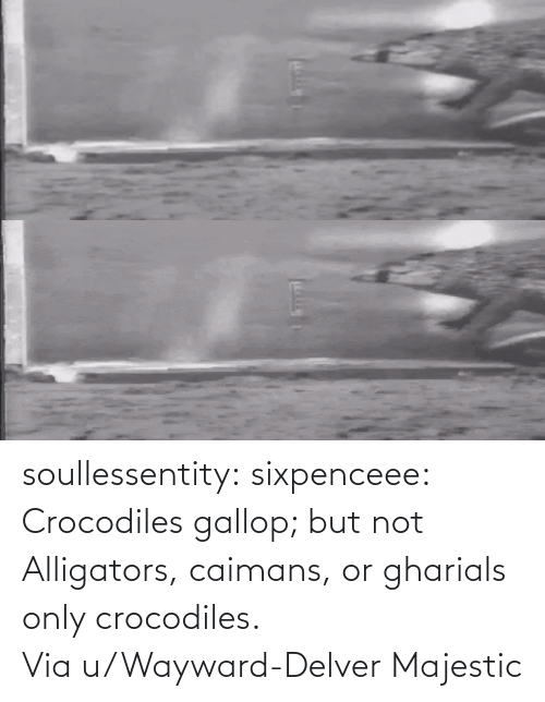 user: soullessentity: sixpenceee: Crocodiles gallop; but not Alligators, caimans, or gharials only crocodiles. Viau/Wayward-Delver Majestic