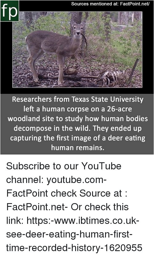 woodland: Sources mentioned at: FactPoint.net/  fp  Researchers from Texas State University  left a human corpse on a 26-acre  woodland site to study how human bodies  decompose in the wild. They ended up  capturing the first image of a deer eating  human remains. Subscribe to our YouTube channel: youtube.com-FactPoint check Source at : FactPoint.net- Or check this link: https:-www.ibtimes.co.uk-see-deer-eating-human-first-time-recorded-history-1620955