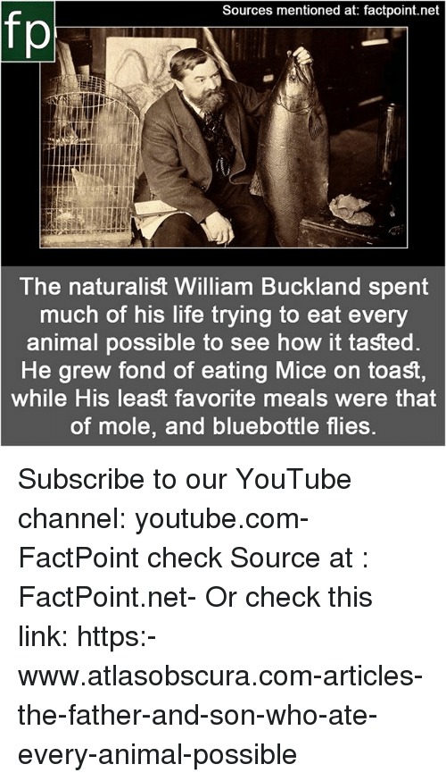 Life, Memes, and youtube.com: Sources mentioned at: factpoint.net  The naturalist William Buckland spent  much of his life trying to eat every  animal possible to see how it tasted  He grew fond of eating Mice on toast,  while His least favorite meals were that  of mole, and bluebottle flies Subscribe to our YouTube channel: youtube.com-FactPoint check Source at : FactPoint.net- Or check this link: https:-www.atlasobscura.com-articles-the-father-and-son-who-ate-every-animal-possible