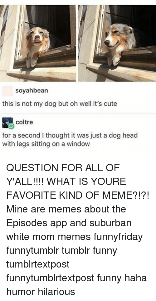Cute, Funny, and Head: soyahbean  this is not my dog but oh well it's cute  coltre  for a second l thought it was just a dog head  with legs sitting on a window QUESTION FOR ALL OF Y'ALL!!!! WHAT IS YOURE FAVORITE KIND OF MEME?!?! Mine are memes about the Episodes app and suburban white mom memes funnyfriday funnytumblr tumblr funny tumblrtextpost funnytumblrtextpost funny haha humor hilarious