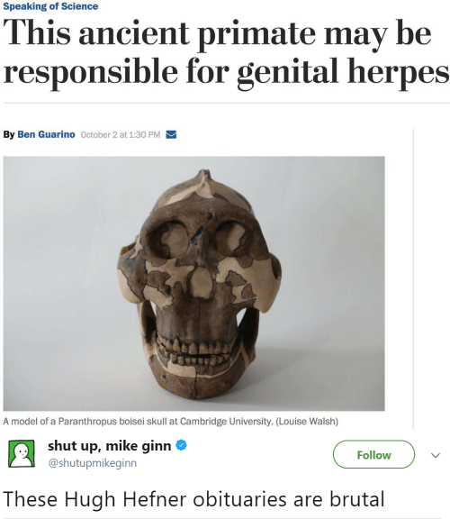 Skull: Speaking of Science  This ancient primate may be  responsible for genital herpes  By Ben Guarino October 2 at 1:30 PM  A model of a Paranthropus boisei skull at Cambridge University. (Lou ise Walsh)   shut up, mike ginn  Follow  @shutupmikeginn  These Hugh Hefner obituaries are brutal