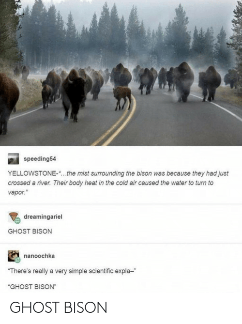 "Ghost, Heat, and Water: speeding54  YELLOWSTONE-  the mist surrounding the bison was because they had just  crossed a river. Their body heat in the cold air caused the water to turn to  vapor.""  dreamingariel  GHOST BISON  nanoochka  ""There's really a very simple scientific expla-  ""GHOST BISON"" GHOST BISON"