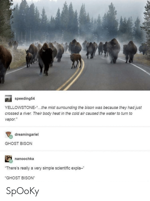 "bison: speeding54  YELLOWSTONE-""...the mist surrounding the bison was because they had just  crossed a river. Their body heat in the cold air caused the water to turn to  vapor.""  dreamingariel  GHOST BISON  nanoochka  ""There's really a very simple scientific expla-  ""GHOST BISON"" SpOoKy"