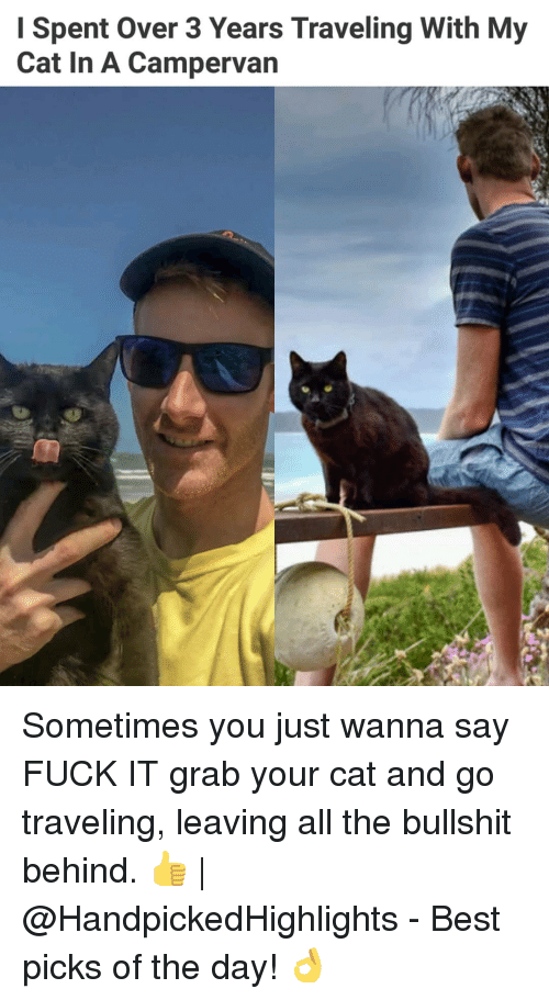 Memes, Best, and Fuck: Spent Over 3 Years Traveling With My  Cat In A Campervan Sometimes you just wanna say FUCK IT grab your cat and go traveling, leaving all the bullshit behind. 👍 | @HandpickedHighlights - Best picks of the day! 👌