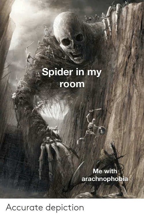 Reddit, Spider, and Arachnophobia: Spider in my  room  Me with  arachnophobia Accurate depiction