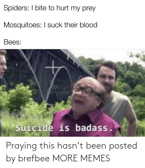 Suicide: Spiders: I bite to hurt my prey  Mosquitoes: I suck their blood  Bees:  Suicide is badass. Praying this hasn't been posted by brefbee MORE MEMES