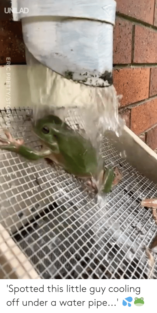 cooling-off: 'Spotted this little guy cooling off under a water pipe...' 💦🐸