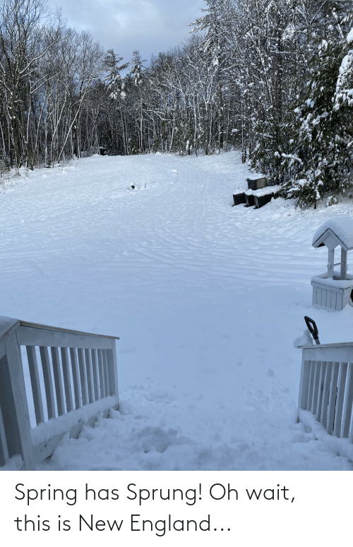 new england: Spring has Sprung! Oh wait, this is New England...