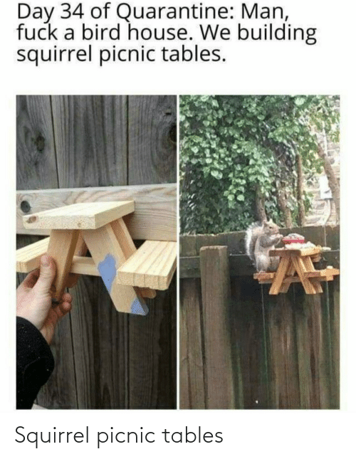 Squirrel: Squirrel picnic tables