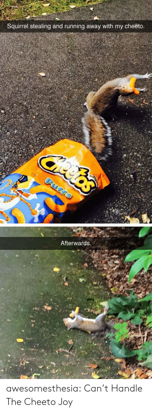 running away: Squirrel stealing and running away with my cheeto  Afterwards awesomesthesia:  Can't Handle The Cheeto Joy