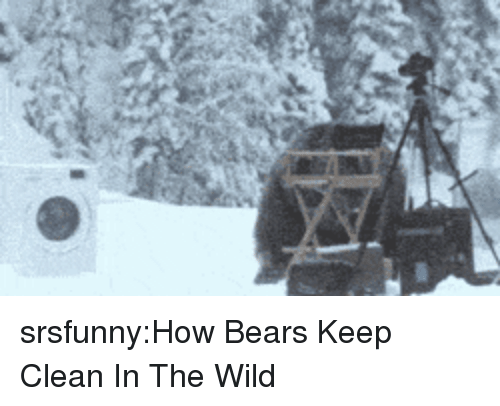 Tumblr, Bears, and Blog: srsfunny:How Bears Keep Clean In The Wild