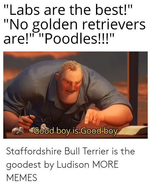 Today: Staffordshire Bull Terrier is the goodest by Ludison MORE MEMES
