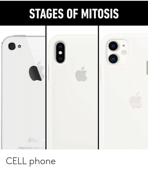 9gag, Apple, and Iphone: STAGES OF MITOSIS  @9GAG  iPhone  Designed by Apple in Califomia A CELL phone