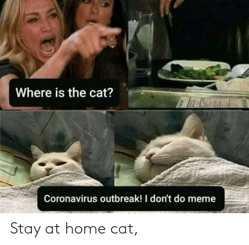 stay: Stay at home cat,