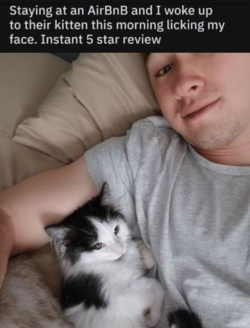 Airbnb: Staying at an AirBnB and I woke up  to their kitten this morning licking my  face. Instant 5 star review