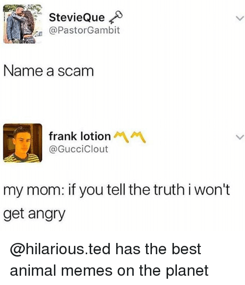 Best Animal Memes: StevieQue  @PastorGambit  Name a scam  frank lotion  @GucciClout  my mom: if you tell the truth i won't  get angry @hilarious.ted has the best animal memes on the planet
