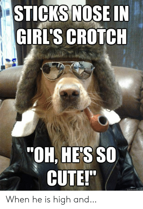 "Quickmeme Com: STICKS NOSE IN  GIRL'S CROTCH  ""OH, HE'S SO  CUTE!""  quickmeme.com When he is high and…"