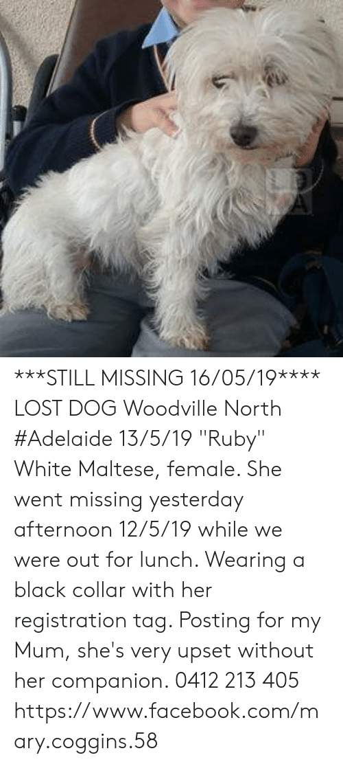 "Facebook, Memes, and Lost: ***STILL MISSING 16/05/19****  LOST DOG Woodville North #Adelaide 13/5/19 ""Ruby"" White Maltese, female. She went missing yesterday afternoon 12/5/19 while we were out for lunch. Wearing a black collar with her registration tag. Posting for my Mum, she's very upset without her companion.  0412 213 405 https://www.facebook.com/mary.coggins.58"