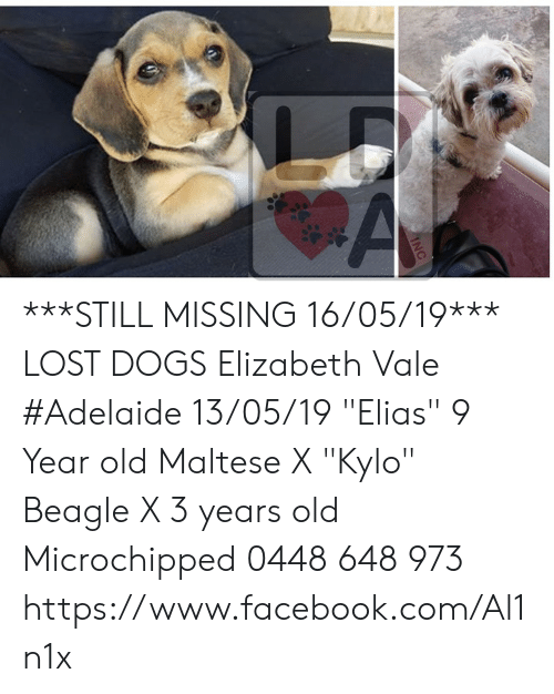 "Dogs, Facebook, and Memes: ***STILL MISSING 16/05/19***  LOST DOGS Elizabeth Vale #Adelaide 13/05/19 ""Elias""  9 Year old Maltese X ""Kylo"" Beagle X 3 years old Microchipped  0448 648 973 https://www.facebook.com/Al1n1x"