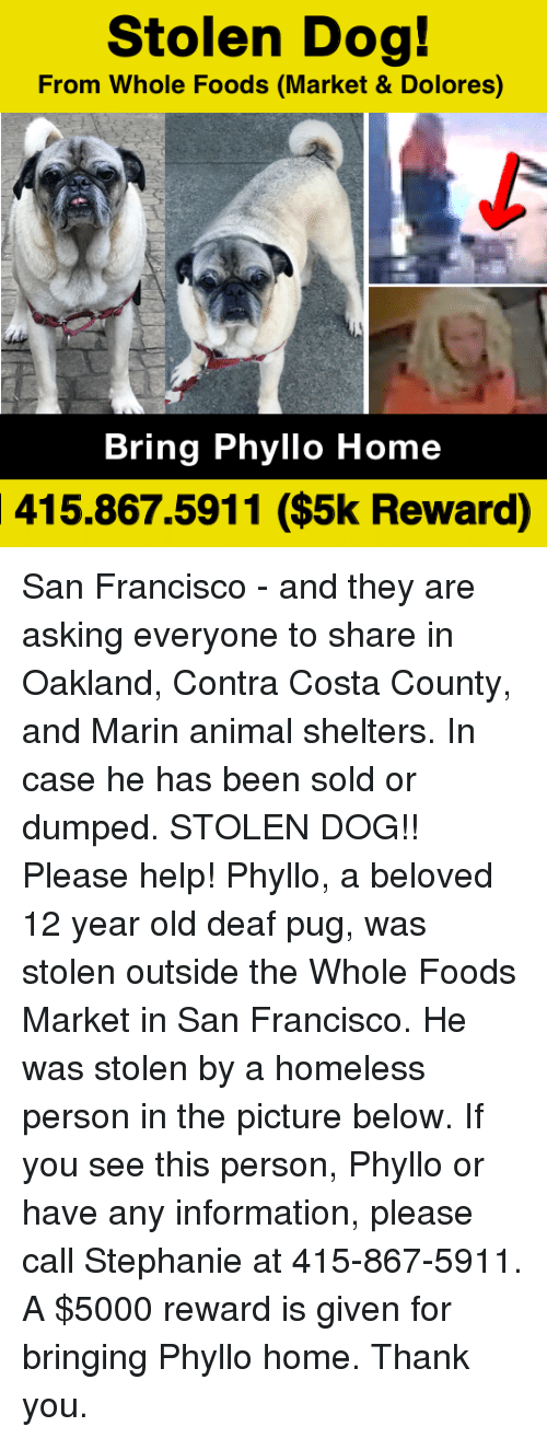 Homeless, Memes, and Whole Foods: Stolen Dog!  From Whole Foods (Market & Dolores)  Bring Phyllo Home  415.867.5911 ($5k Reward) San Francisco - and they are asking everyone to share in  Oakland, Contra Costa County, and Marin animal shelters. In case he has been sold or dumped.  STOLEN DOG!! Please help! Phyllo, a beloved 12 year old deaf pug, was stolen outside the Whole Foods Market in San Francisco. He was stolen by a homeless person in the picture below. If you see this person, Phyllo or have any information, please call Stephanie at 415-867-5911. A $5000 reward is given for bringing Phyllo home. Thank you.