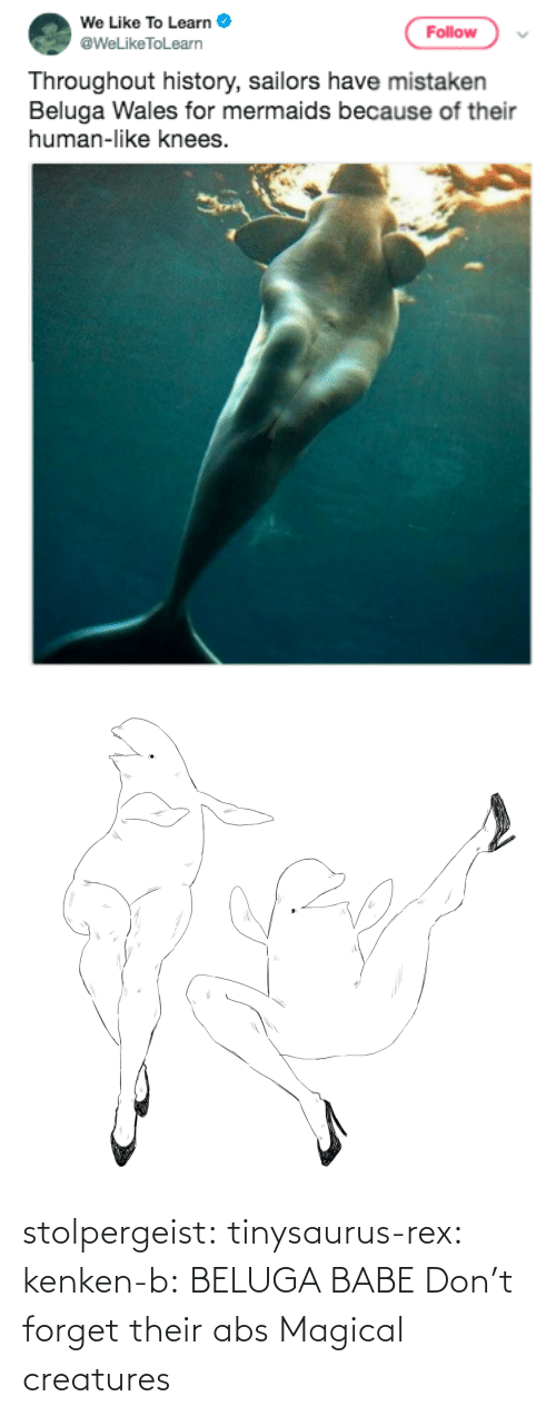 abs: stolpergeist: tinysaurus-rex:  kenken-b: BELUGA BABE Don't forget their abs  Magical creatures